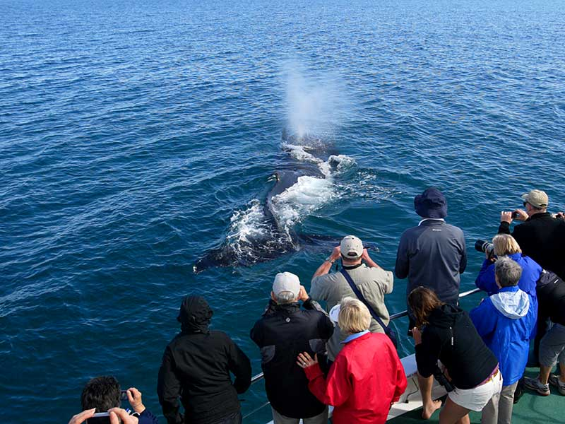 Fraser Island Whale Watching