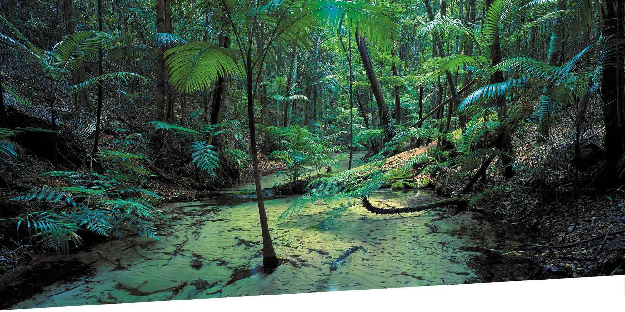 Mile Beach Fraser Island