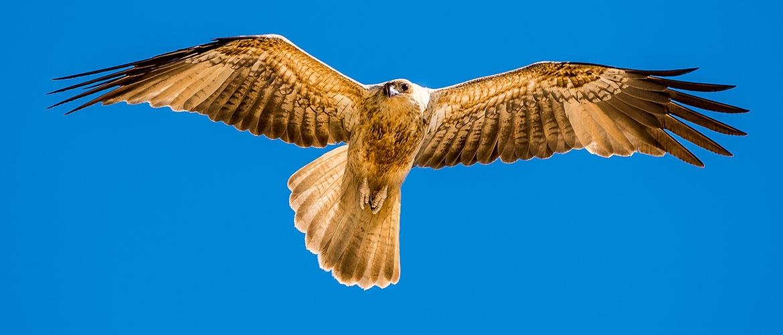 Birds Fraserisland Net